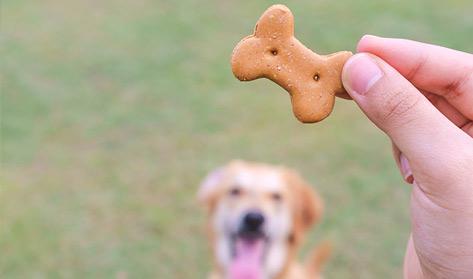 chien-recompense