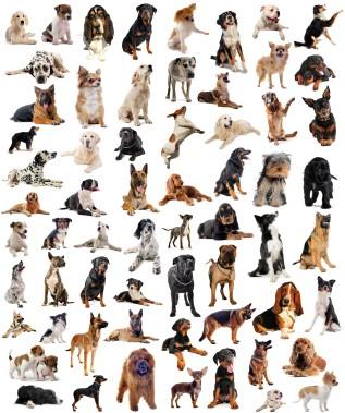 image de chien race