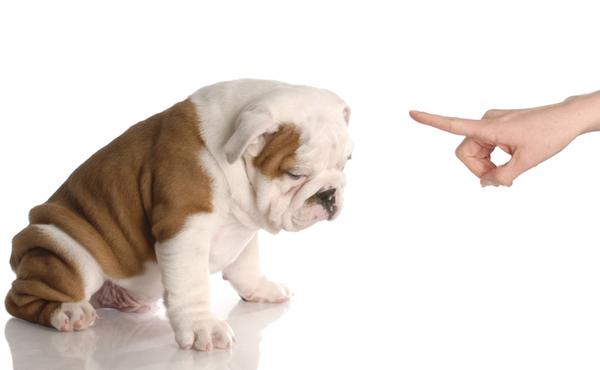 gronder son chien